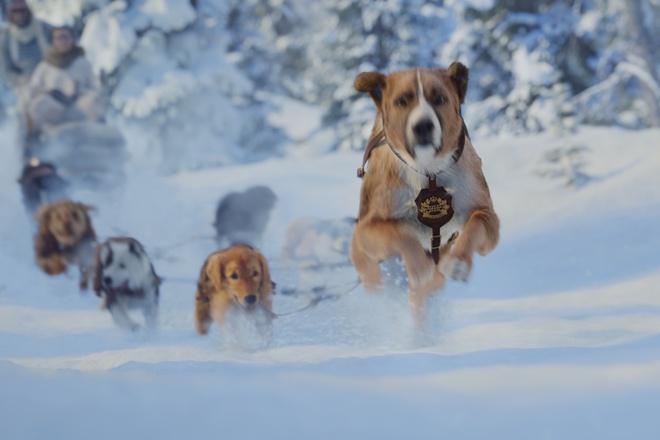 Tổng hợp những bộ phim hay về chó cảm động nhất